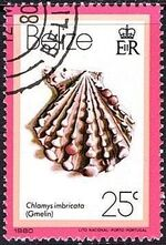 Belize 1980 Shells and Sea Snails i