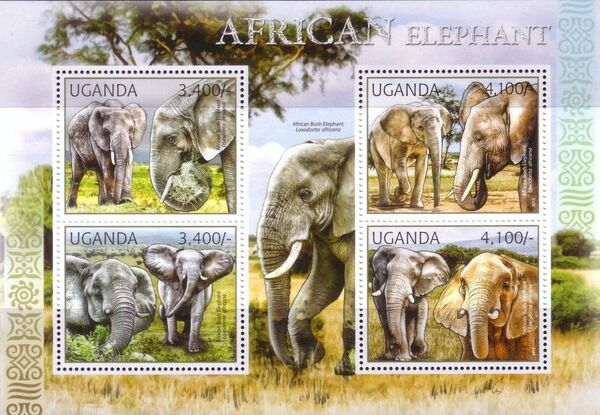 Uganda 2012 Fauna of African Great Lakes Region - African Elephant - African Bush Elephant f