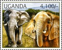 Uganda 2012 Fauna of African Great Lakes Region - African Elephant - African Bush Elephant d