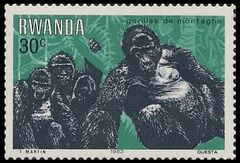 Rwanda 1983 Mountain Gorilla b