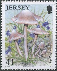 Jersey 2005 Nature - Fungi II c