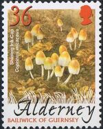 Alderney 2004 Mushrooms c