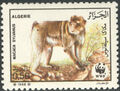 Algeria 1988 WWF - Barbary Macaque a.jpg