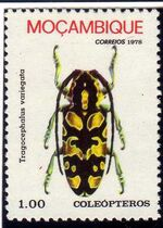 Mozambique 1978 Coleoptera from Mozambique b
