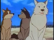Akru, Sura and Luri