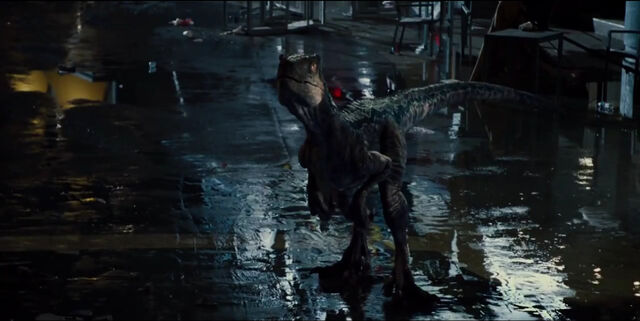 File:Blue looking at Rexy after battle with Indominus Rex.jpg