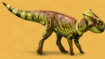 Microceratusfournew.png