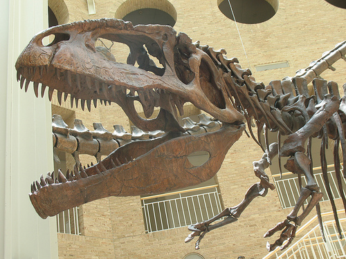 File:Giganotosaurus skull 2122.jpg