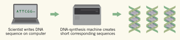 File:DNA synthesis.png