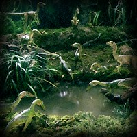 File:JPCompsognathus.jpg