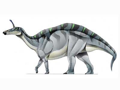 Tsintaosaurus-1
