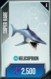 Helicoprion.1