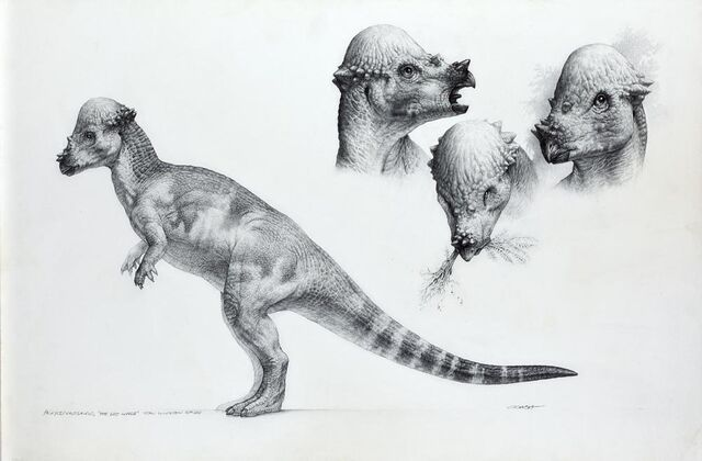 File:Artwork-pachycephalosaurus.jpg