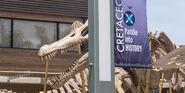Cretaceous-cruise-banner