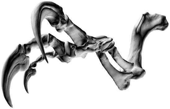 File:Banjos-Arm-2.jpg