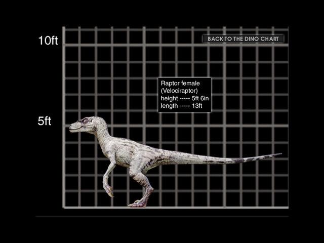 File:1024x768 Velociraptor female size chart.jpg