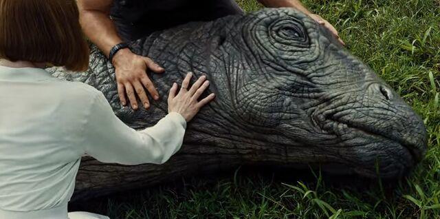File:Apatosaurus.jpeg