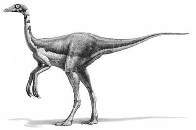 File:Dromiceiomimus.jpg
