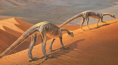 File:Massospondylus.jpg