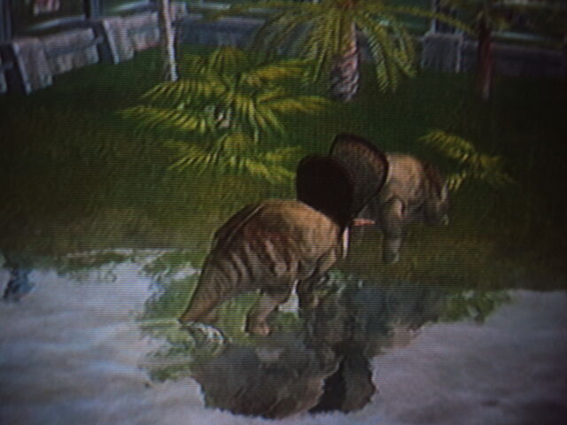 File:A Pair of Torosaurus are fighting for territory.JPG