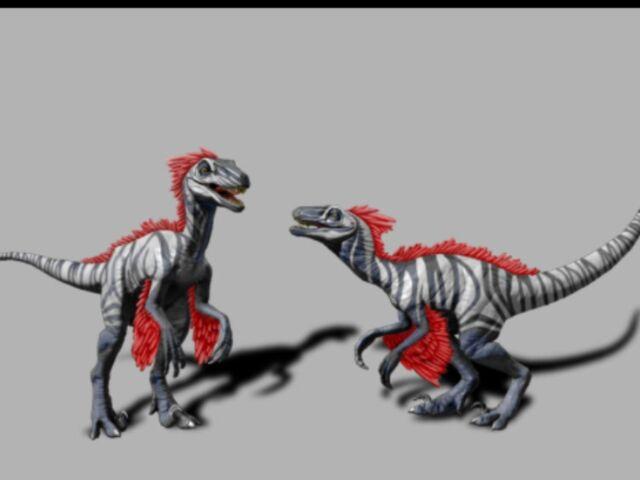 File:Featheredraptor3.jpg