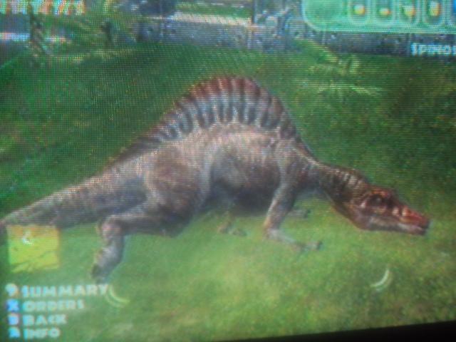 File:Spinosaurus is sleeping.JPG