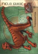 2001 Jurassic Park III 3-D 64 Compsognathus front