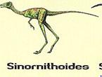 Sinornithoi