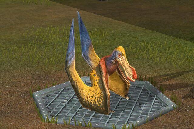 File:Coloborhynchus (16).jpg