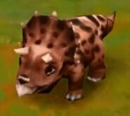 Triceratops (Baby) (Lvl. 21-24)