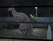 Parasaur2