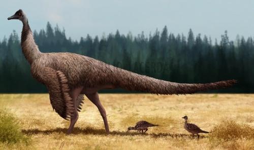 File:Emuasaurus.jpg