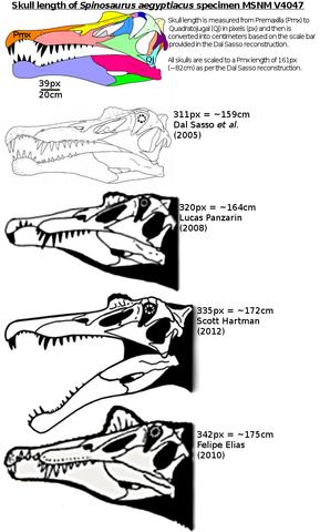 File:Spinosaurus skull length.png