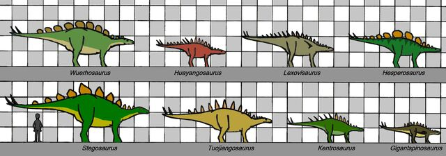 File:Stegosauria size 012.jpg