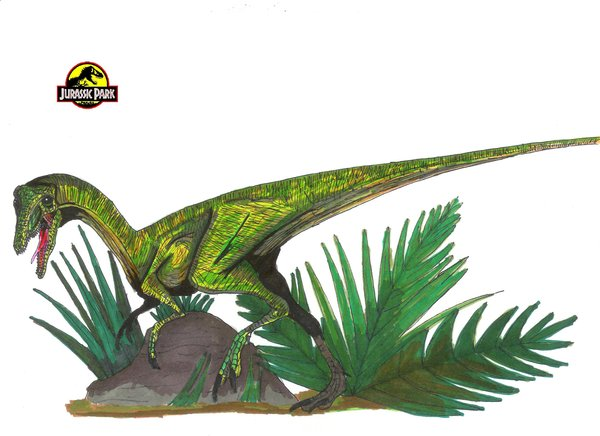 File:Compsognathus by hellraptor.jpg