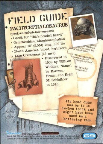 File:2001 Jurassic Park III 3-D 69 Pachycephalosaurus back.jpg