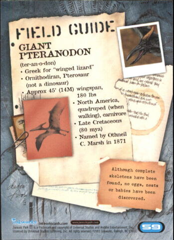 File:2001 Jurassic Park III 3-D 59 Giant Pteranodon back.jpg