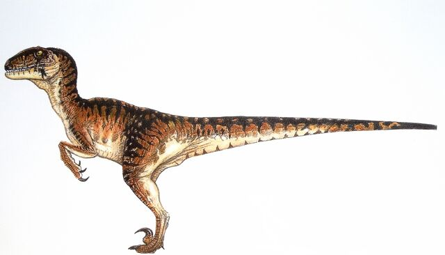 File:Velociraptor-small.jpg