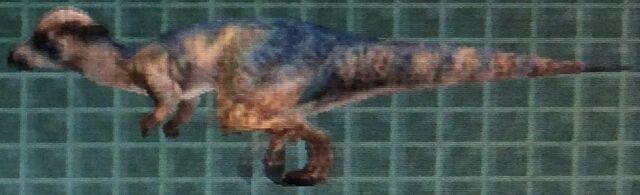 File:Pachycephalosaurus (Forgotten).jpg