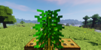 Graminidites bambusoides
