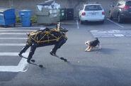 Robotic-dog-vs-real-dog