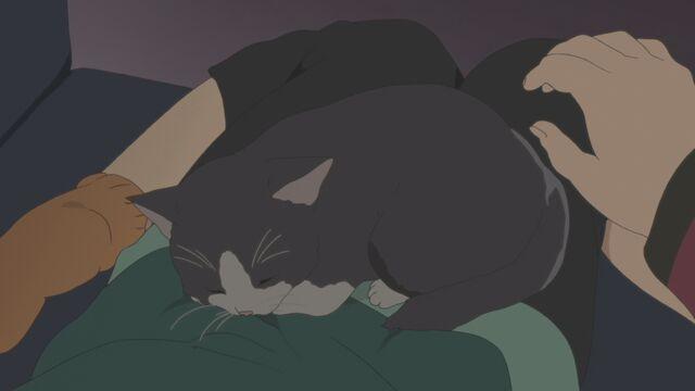 File:Azu-nyan 2 sleeping on Azusa's lap.JPG