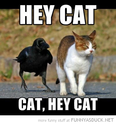 File:Funny-bird-crow-walking-beside-cat-hey-pics.jpg