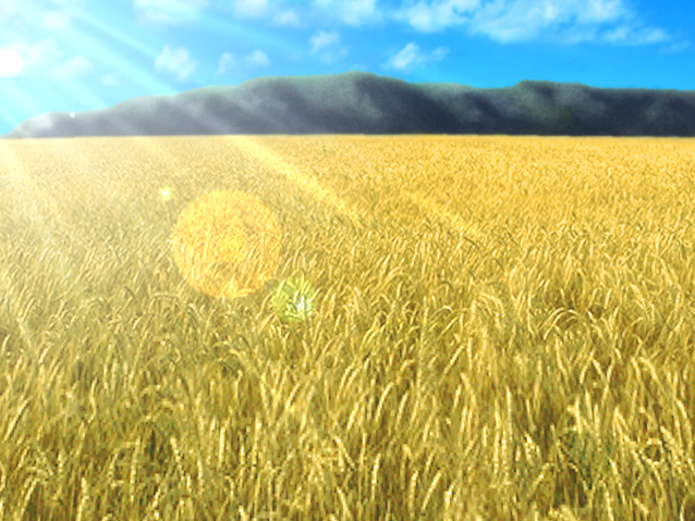 File:Wheat field.png