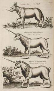 John Jonston Historiae Naturalis de Quadripedibus Tabula XI