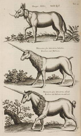 File:John Jonston Historiae Naturalis de Quadripedibus Tabula XI.jpg