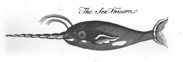File:Pierre Pomet Sea Unicorn.png