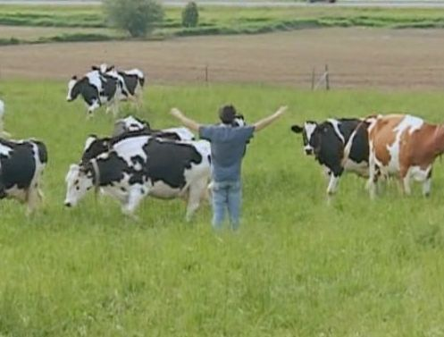 File:Onewiththecows.jpg