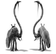Fauna8
