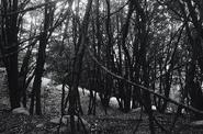 Crescent Manor-The Nature5